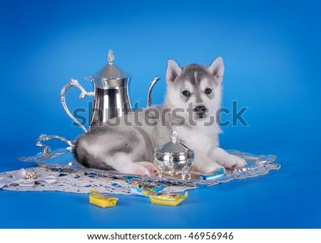 Husky puppy and tea set - stock photo