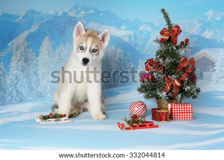 husky puppy with gifts and christmas decorations - Husky Christmas Decoration