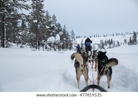 Husky sledge ride in Lapland, Finland.