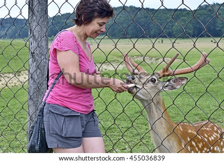 HUST,UKRAINE - JUNE 27, 2016: The life of wild animals at captivity. Deer firm at Carpathians . Woman - tourist feeds of the spotted deer  behind fence from mesh.