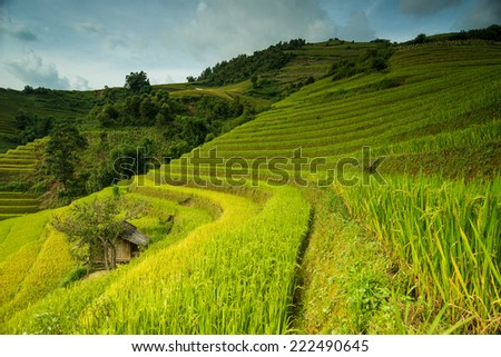 Hut with rice fields on terraced of Mu Cang Chai, YenBai, Vietnam.
