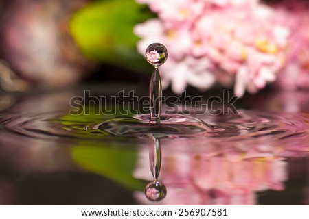 Hyacinth drop of water - stock photo