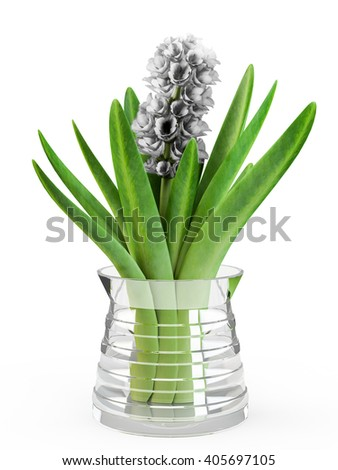 Hyacinth flower in glass vase isolated on white background. 3D Rendering. - stock photo