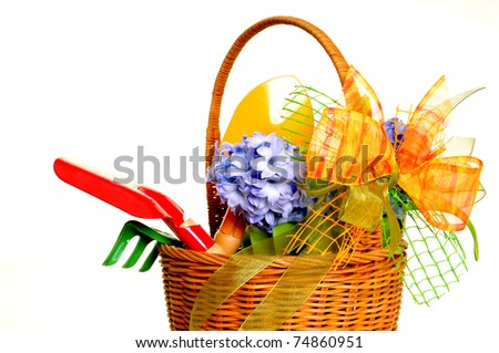 hyacinth flowers in the basket and garden tools on white