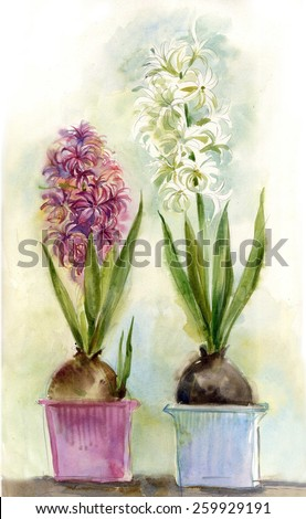 hyacinth illustration watercolor, two hyacinth in pots
