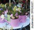 hyacinth in watering-pot in street shop flower - stock photo