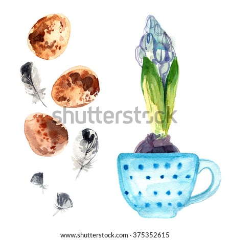 Hyacinth. Spring flower in a cup painted with watercolors on white background. Bulbous flower. Spring decor. Quail eggs. Decor for Easter. - stock photo