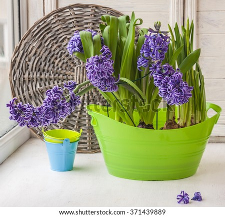 Hyacinths and daffodils on the window