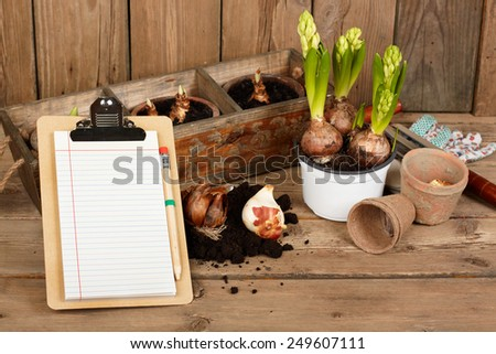 hyacinths bulbs, gardening tools - stock photo