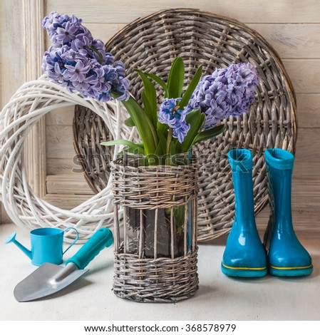 Hyacinths in a basket on a  background rubber boots and garden shovel  on the window