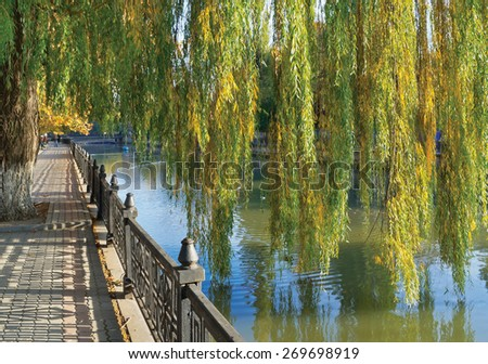 Hybrid weeping willows (Salix babylonica) in autumn. Quay of Salgir River in Simferopol, Crimea - stock photo