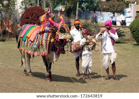 HYDERABAD,AP,INDIA-JANUARY 14:Musicians take around decorated bull or gangireddu during sankranti or pongal hindu festival after harvest and arrival of spring on January 14,2014 in Hyderabad,India.