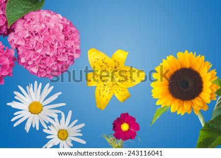 Hydrangea, Daisies, a Yellow Tiger Lily, a Magenta Anemone Coronaria and a Sunflower Isolated - stock photo