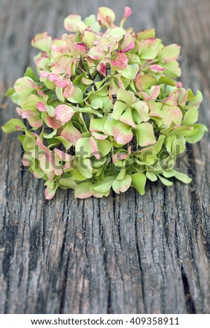 Hydrangea flower on wooden background - stock photo