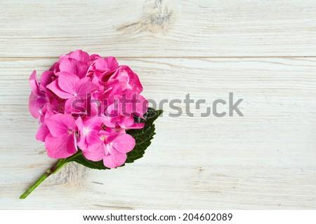 hydrangea flower on wooden surface - stock photo