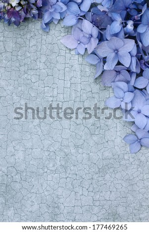 Hydrangeas over a craquelure background with room for copy space.