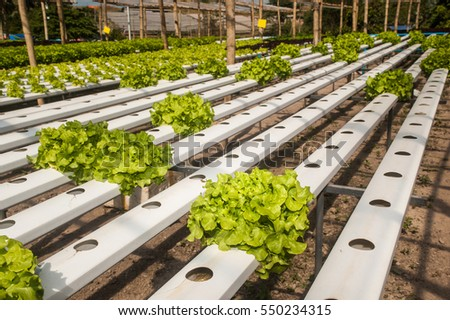 Hydrophonics farm in greenhouse at Corofield, Thailand.