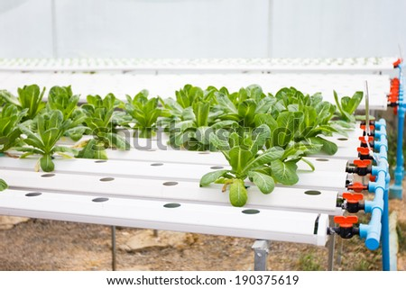 Hydroponic vegetable plantation system in Thailand - stock photo