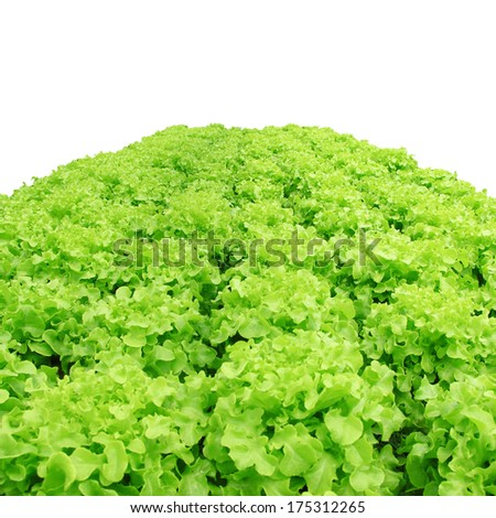Hydroponics method of growing plants using mineral nutrient solutions, in water, without soil. Close up planting hand Hydroponics plant - stock photo