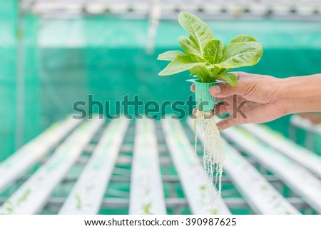 the concept of gardening without soil hydroponics Hydroponic gardening - you can build in your backyard hydroponics is basically a greek word which associates the method of growing plants using nutrient solutions, without soil is known as hydroponics.