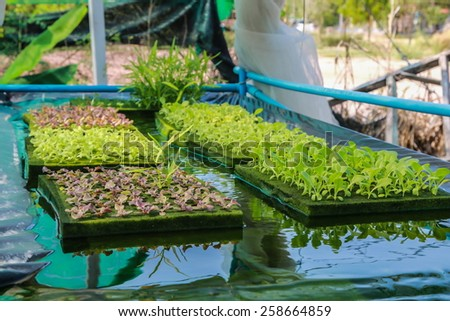 Hydroponics Vegetables : planting the vegetable without soil. Grow them in the tube which contains liquid that has fertiliser. - stock photo