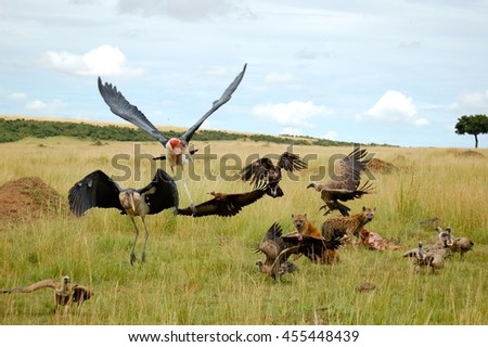 Hyenas and Vultures feasting at dusk in the Masai Mara - stock photo