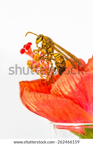 Hymenoptera on red flower