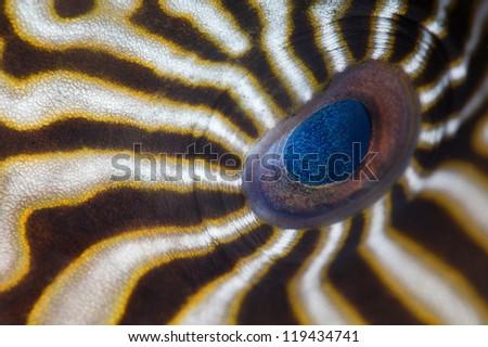 Hypnotic eye - stock photo