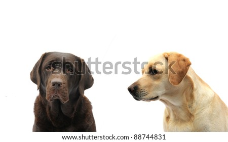 I am  looking at you - stock photo
