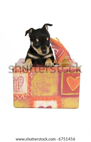 I am your gift! - stock photo
