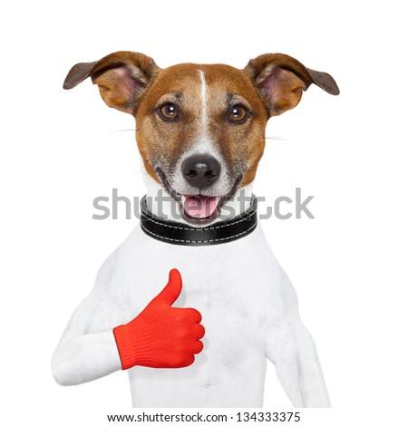 i like dog  with a thumb up - stock photo