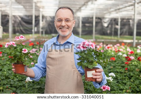 I love my job. Experienced senior gardener is standing at greenhouse and smiling. He is holding flowerpots in both his hands. The man is looking at camera happily - stock photo