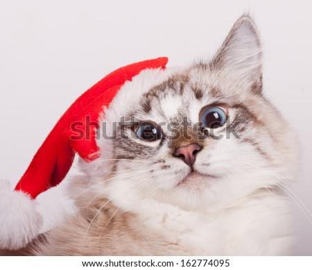 I'm Santa. Cat wearing a Santa Claus hat. portrait - stock photo