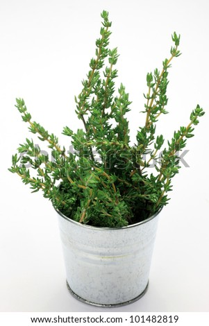 I put thyme in a bucket and took it in a white background.