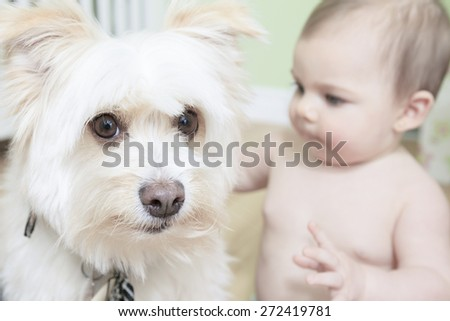 I think that is mine ball! 9 months old Baby and Dog playing on white background - stock photo