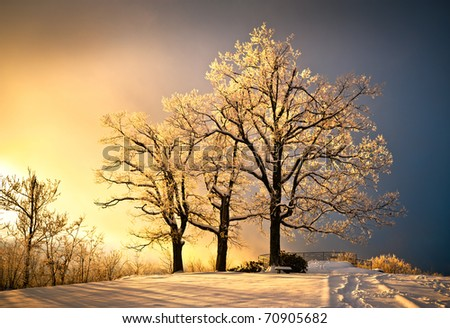 Ice and Frost Covered Oak Tree in Cold Winter Snow at Jump Off Rock In Western North Carolina Blue Ridge Mountains - stock photo