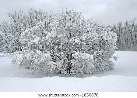 Ice and snow covered tree in a park - stock photo