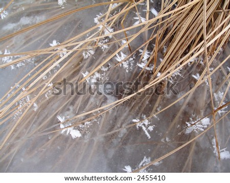 Ice and withered grass - pastel image - stock photo