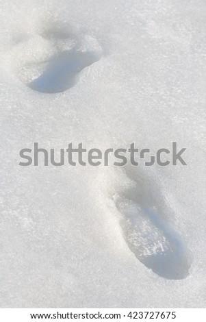 Ice at the seashore of Riga gulf, Baltic Sea, Jurmala, Latvia - stock photo