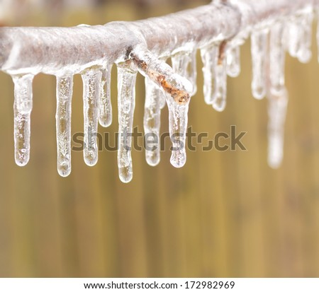 Ice coated tree branch after an ice storm. - stock photo