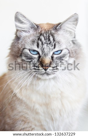 Ice cold domestic cat's look. - stock photo