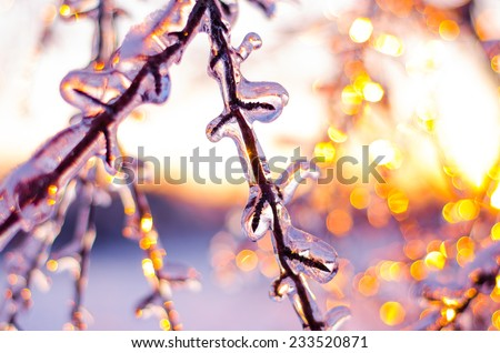 Ice covered branches shimmering softly during a Winter's evening - stock photo