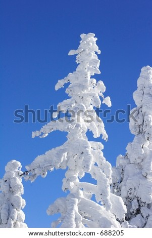 ice covered tree with blue sky - stock photo