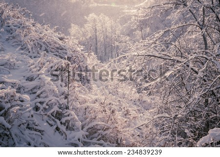 Ice covered trees in scenic snowy forest after winter snow storm, Ontario Canada - stock photo