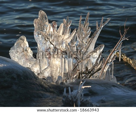 ice covered twigs - stock photo