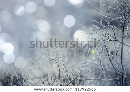 ice crystals on a tree and bokeh background - stock photo