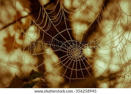 Ice Encrusted Spider Web in Sepia Tone