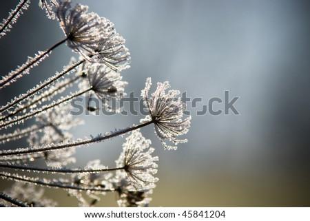 Ice Flower - stock photo