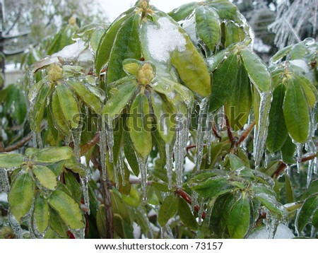 Ice Storm - stock photo
