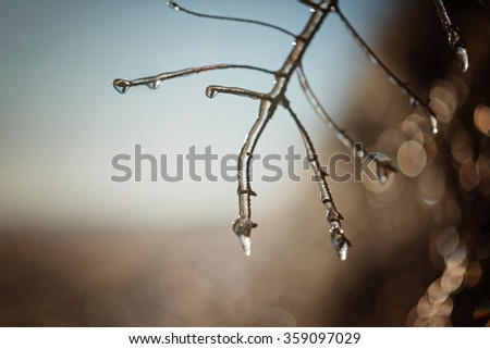 Ice tree branches close-up in winter sunny day. Frozen plant. - stock photo